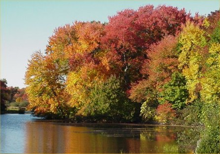 Mumford River in Autumn