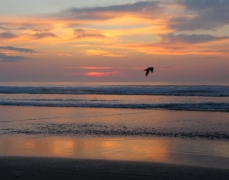 Flying bird sunrise