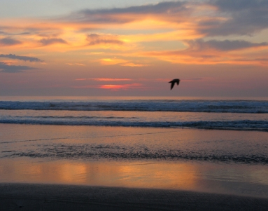 Flying bird sunrise