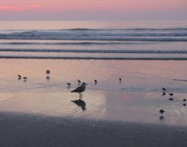 Ogunquit sea shore seagulls