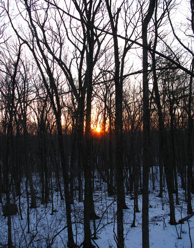 Late Winter Dawn