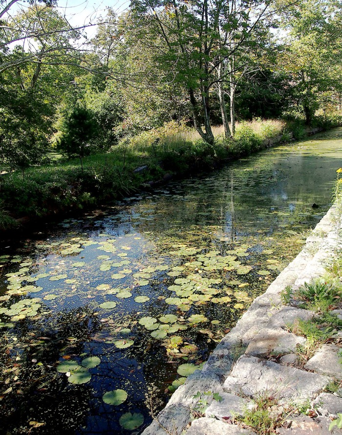 Thousands of water lilies bloom on the small canal that runs to the renovated Crown and Eagle mill.