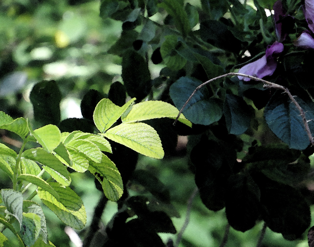 Leaves and one purple flower.