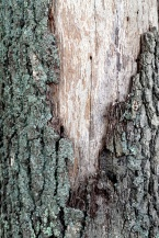 96-TreeTrunk-HP-1