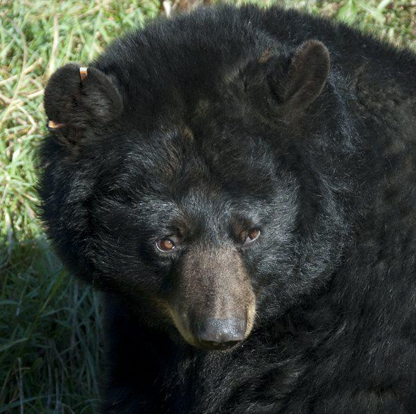 Please visit Bear With Us at http://bearwithus.org/ to see how you can help save the bears ... not dream bears, but the real ones.