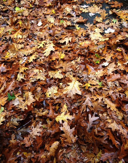 Yesterday's leaves - Marilyn Armstrong