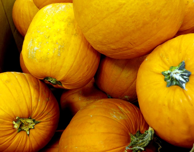 Big pumpkins in the bin, waiting to become this year's Jack O' Lantern.