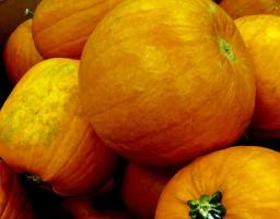 75-BigPumpkins-HP-3
