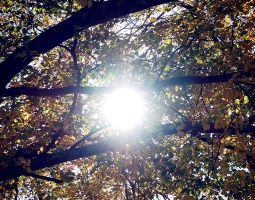 Good day sunshine!