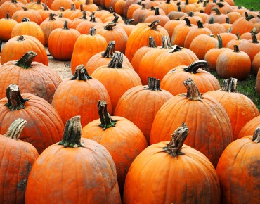 March of the pumpkins ...