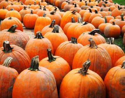 So many pumpkins