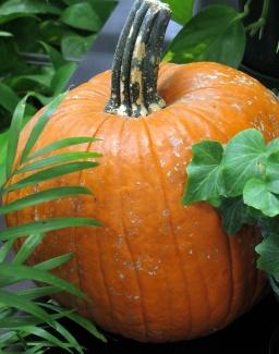 75-PumpkinHannHP-2