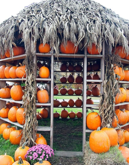 Pumpkin house ...