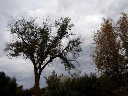 Strange tree ...