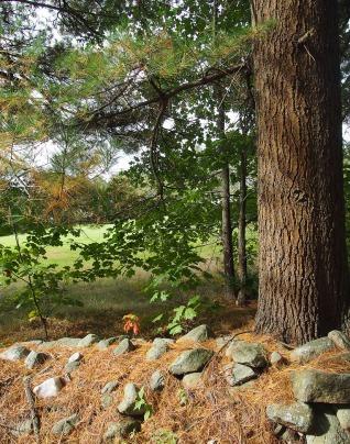 Stone fence and a big tree