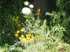 Weeds, wildflowers, and grass gone to seed ...