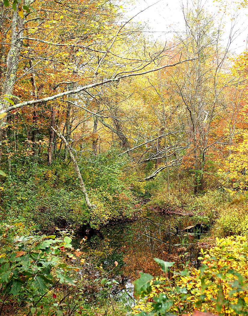 Yellow leaves by the river, photo: Marilyn Armstrong
