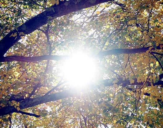 Sun Shines