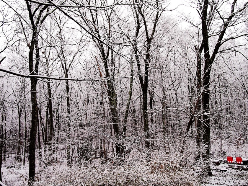 Two red lawn chairs are bright in a wintry woods.