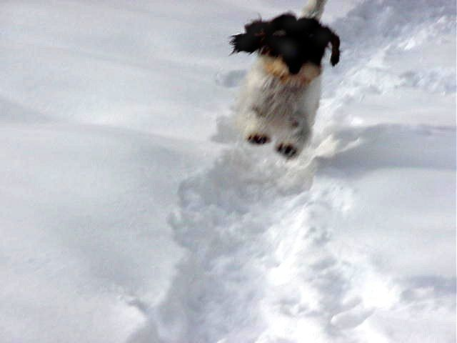 Griffin flying in snow
