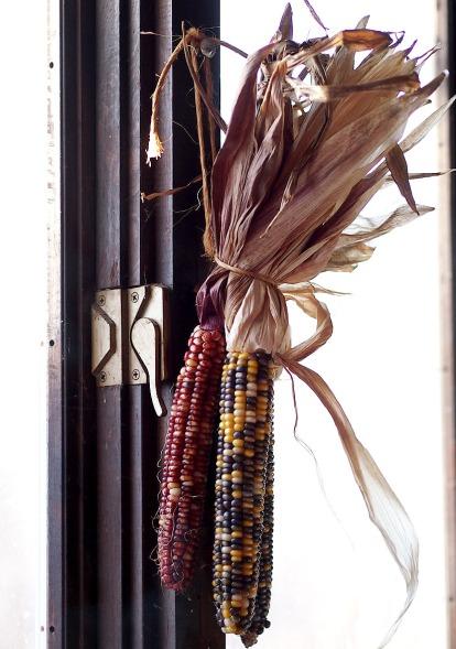 Morning Light on Corn