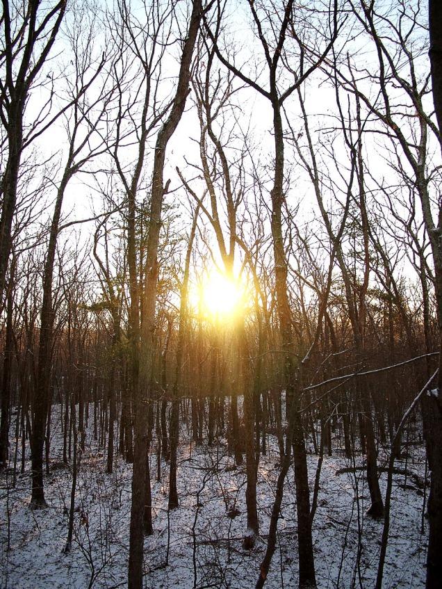 Winter December Sunrise