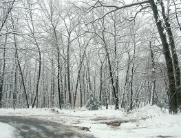 Woods and path of snow