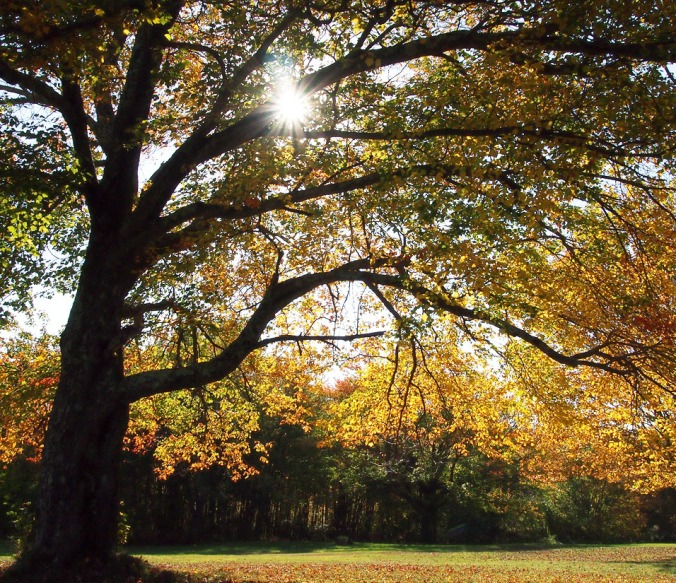 Rays of the autumn sun