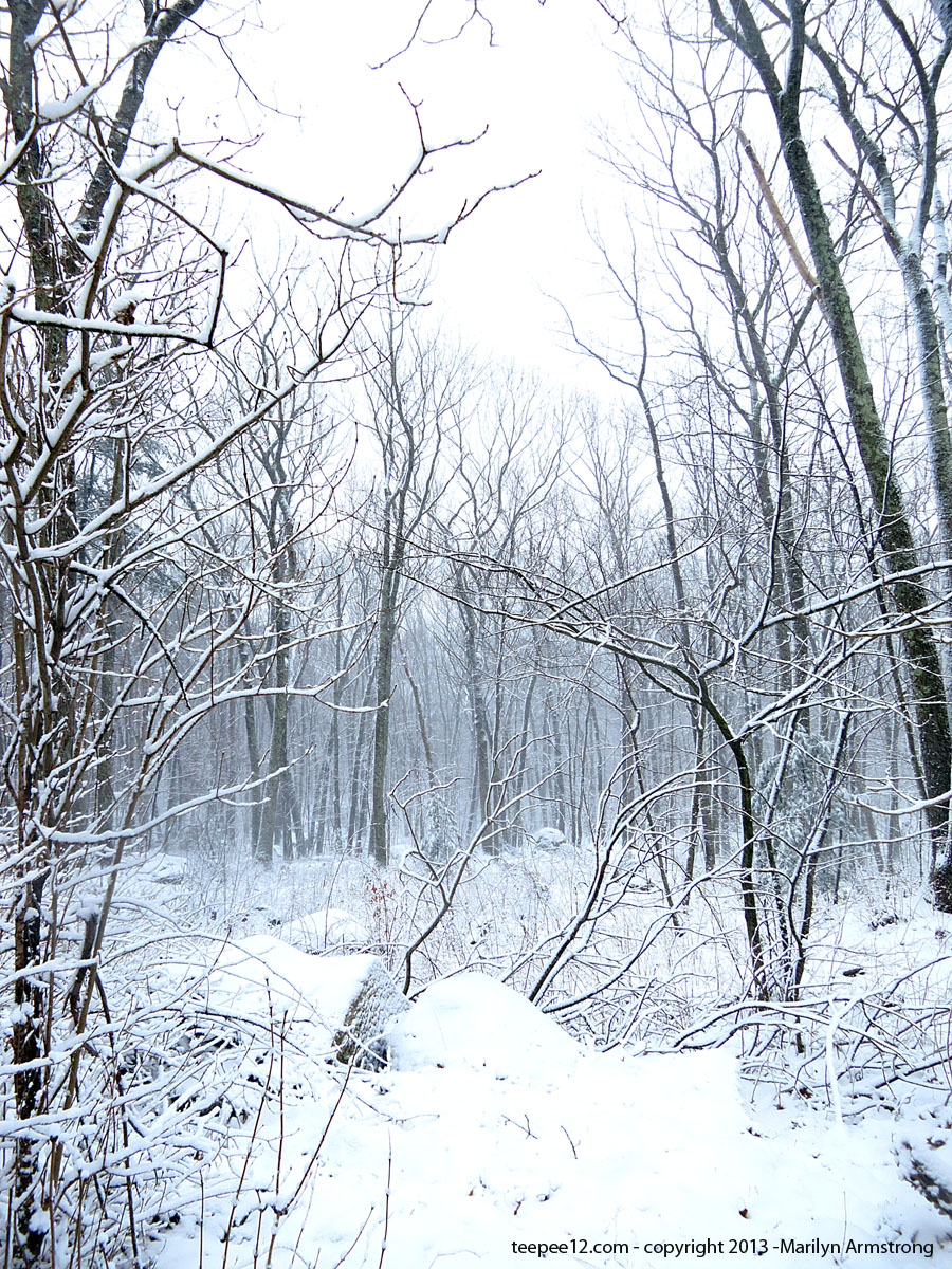 The silence of the woods after a heavy snow