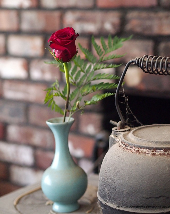 Jun vase (Northern Song on through the Yuan) holds a fresh rose