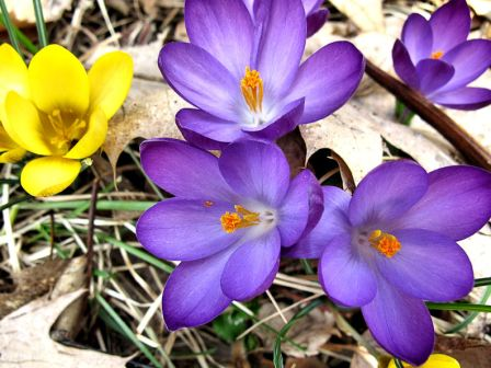 The crocus knows!