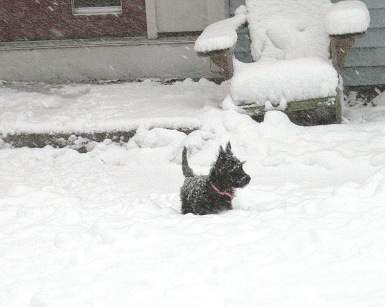 As a puppy ... maybe 12 weeks old. She loved snow and grew up in it.