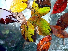 Rain and leaves