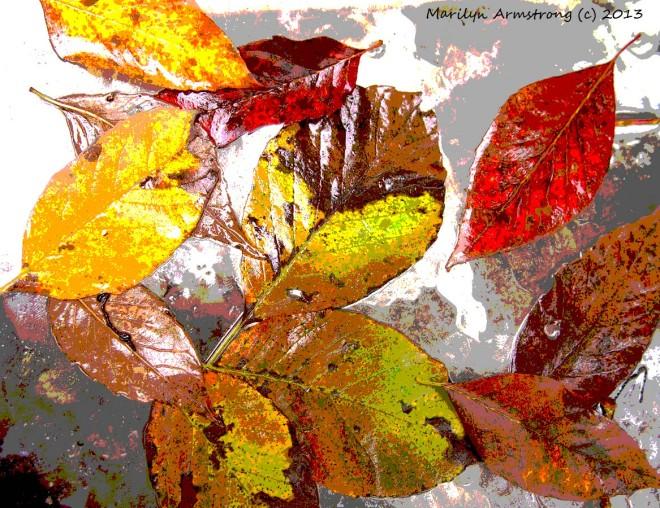 Wet leaves on glass tablel