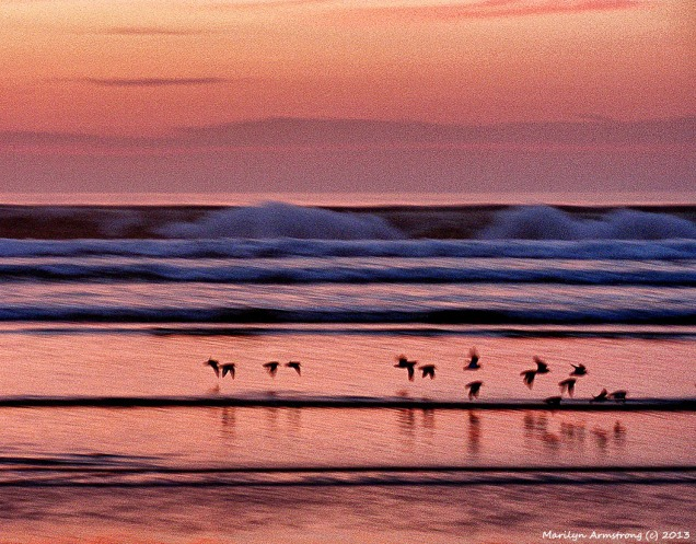The flock of birds at dawn on Ogunquit beach