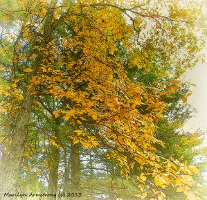 Early Yellow Foliage