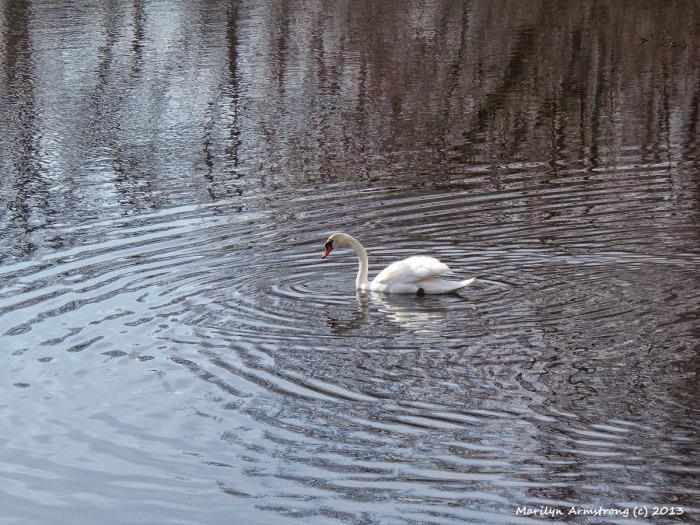 Swan76