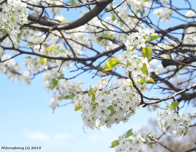 copy-75-flowersnk_0192.jpg