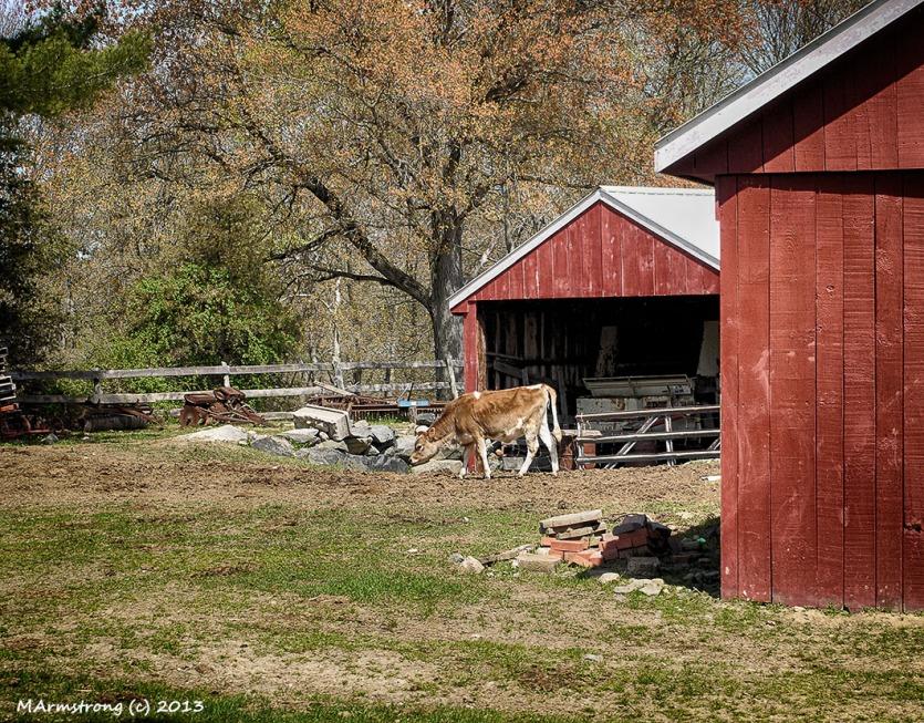 In the barnyard