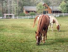 Relaxing horses