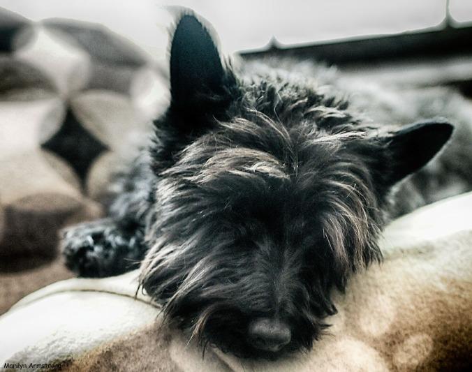 Bonnie Resting