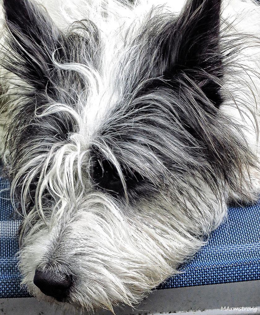 Pensive Kaysey