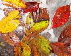 Wet Leaves 1