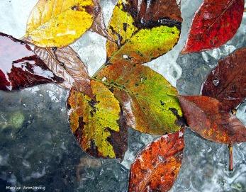 Wet Leaves 4