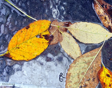 Wet Leaves 5