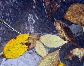 Wet Leaves 6