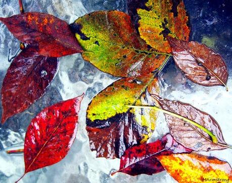 Wet Leaves 3