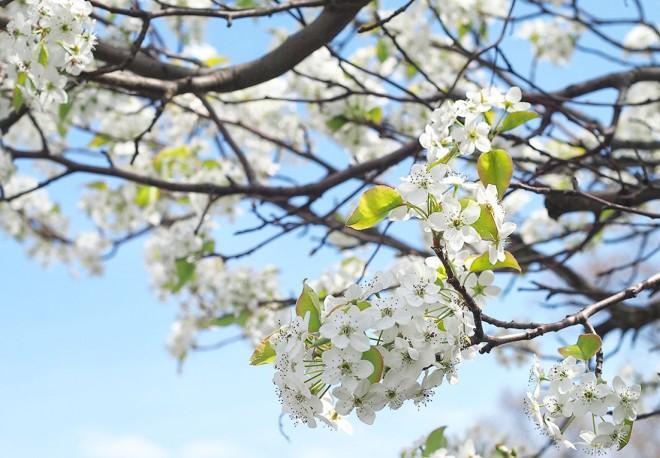 cropped-75-flowersnk_019.jpg