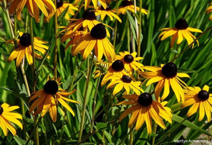 75-augflowers-nk_4.jpg