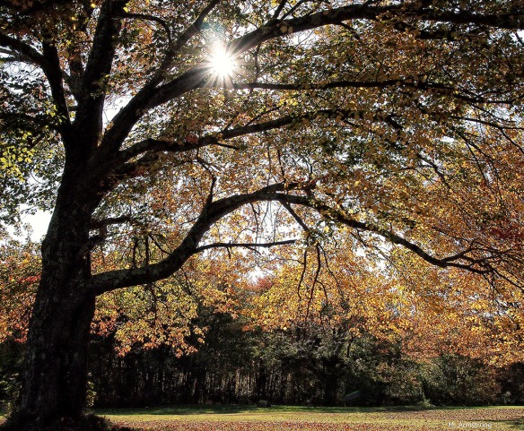 October Tree - Horizontal
